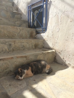 Sleeping Greek cat
