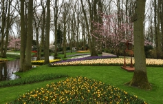 Beautifully manicured flower beds at Keukenhof