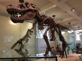 T-Rex at the American Museum of Natural History