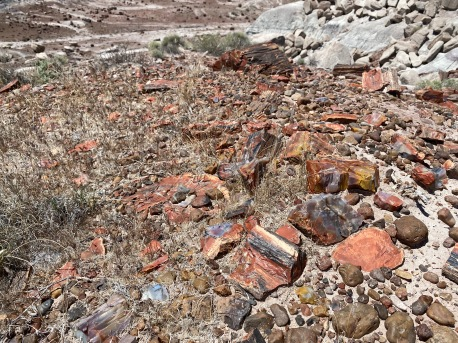 Rainbow colord petrified wood in the Jasper Forest